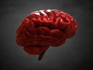 blood_brain_barrier